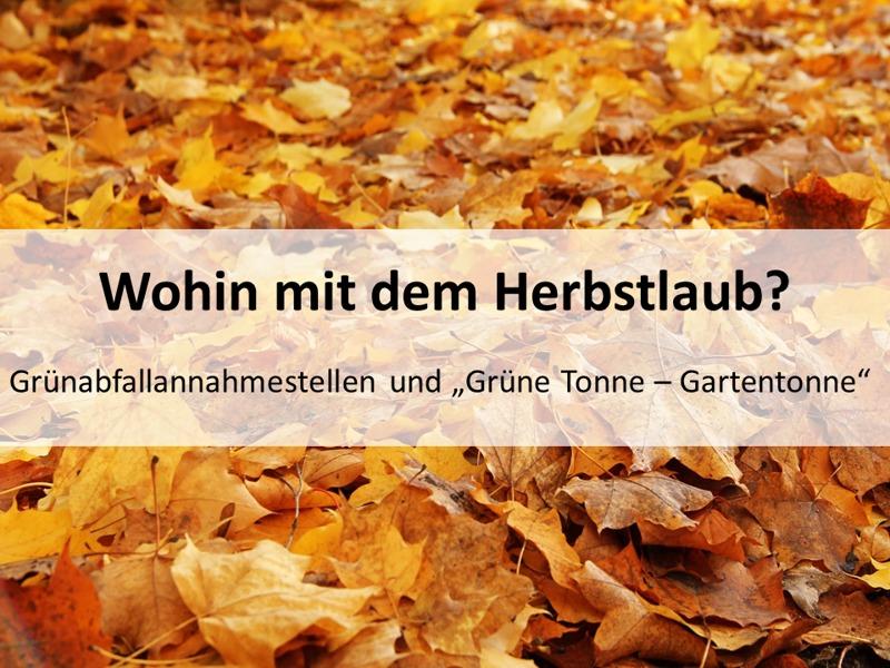 Bild: Herbstlaub